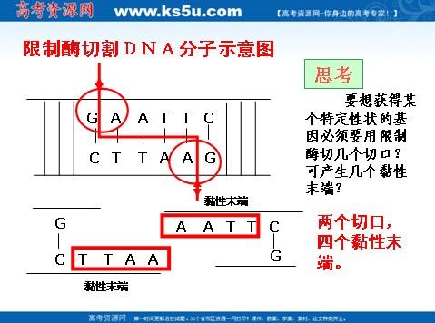 生物选修3专题1基因工程课件