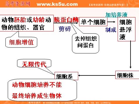 生物:2.2《动物细胞工程》课件(9)(新人教版选修3)