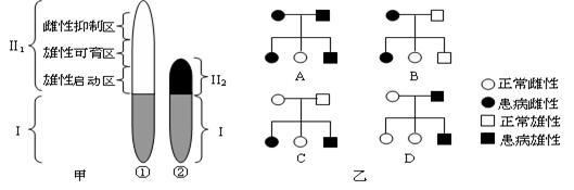 下面甲图为某动物的一对性染色体简图.