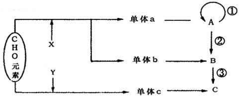 高中生物 这道题里的这个化合物是由几个氨基酸分子失去几个水分子图片