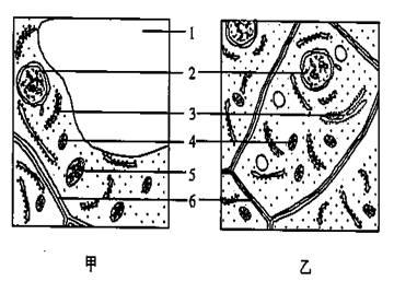 (9分) 下列是细胞结构的示意图.请回答相关问题
